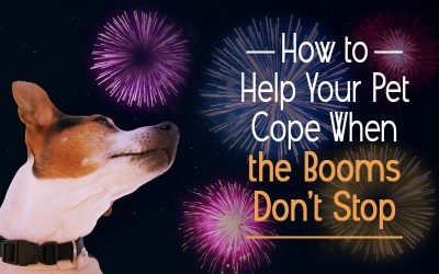 How to Help Your Pet Cope When the Booms Don't Stop