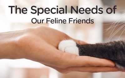 The Special Needs of Our Feline Friends