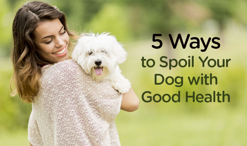 5 Ways to Spoil Your Dog with Good Health