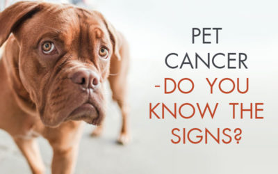 Pet Cancer – Do You Know the Signs?