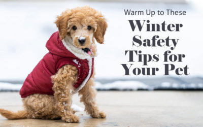Warm Up to These Winter Safety Tips for Your Pet