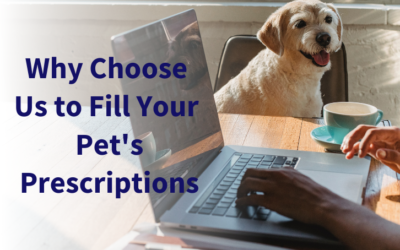Why Choose Us to Fill Your Pet's Prescriptions?