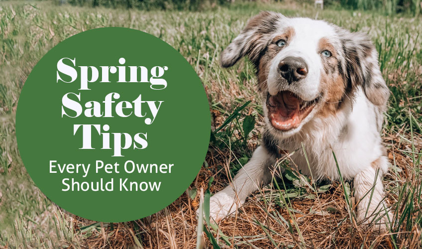 Spring Safety Tips Every Pet Owner Should Know