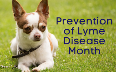 Prevention of Lyme Disease Month