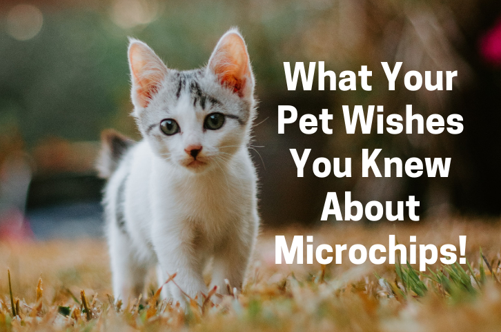 What Your Pet Wishes You Knew About Microchips!
