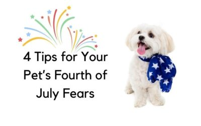 Fear, Stress and Fireworks Safety