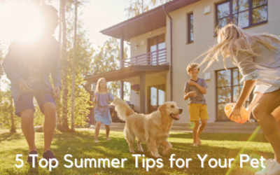 5 Top Summer Tips for Your Pets