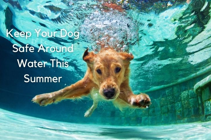Keep Your Dog Safe Around Water This Summer