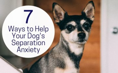 7 Ways to Help Your Dog's Separation Anxiety