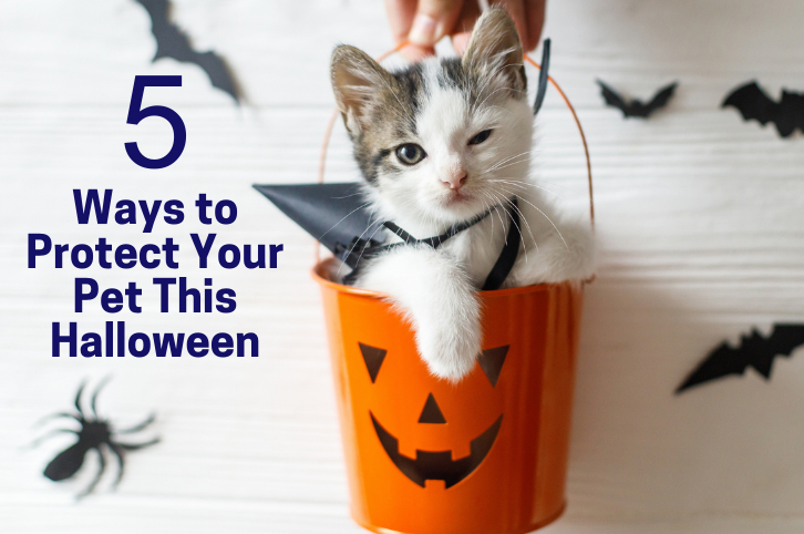 5 Ways to Protect Your Pet This Halloween